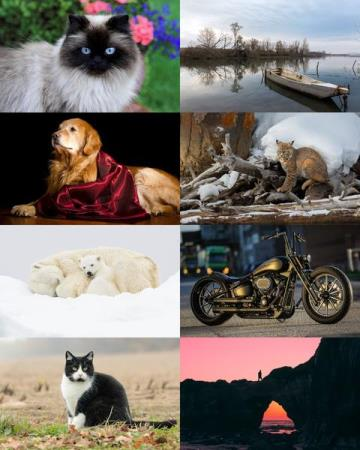 Wallpapers Mix №812