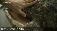 Динорыба / Dinofish (2011) HDTV 1080i
