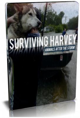 Animal Planet: Спасение животных: ураган Харви / Surviving Harley. Animals After the Storm (2017) HDTV 1080i