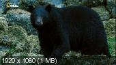 Nat Geo Wild: Пир гризли / Feast of the Grizzly (2016) HDTV 1080i