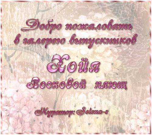 Галерея выпускников Хойя-восковой плющ _090975304e865c9e9829ae4eab28a287