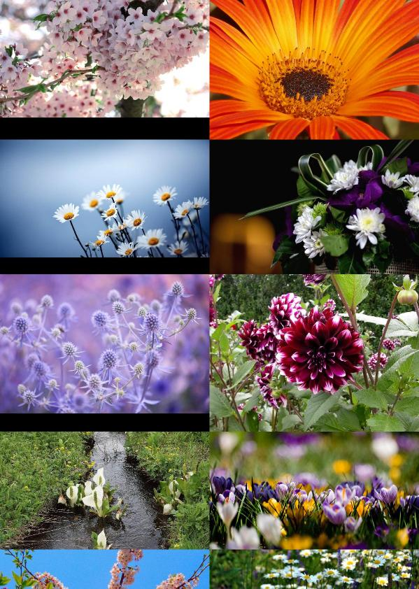 Beautiful Flowers Wallpapers {pack   120}