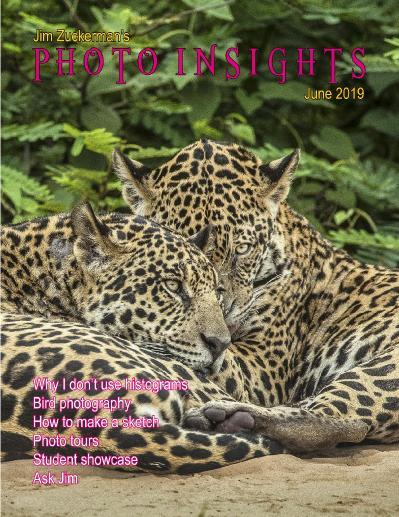 Photo Insights June (2019)