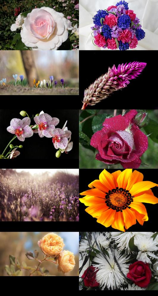 Beautiful Flowers Wallpapers {pack   124}