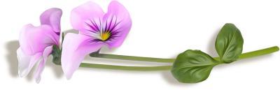 """Фотоконкурс """"Комнатные растения"""". Поздравляем победителей. D763cc53b3da79fbff05247fc25c6a0c"""