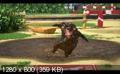 Маша и Медведь  (80 серия (Последний писк моды)) (2019) WEB-DLRip