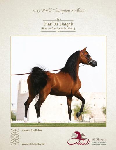 Arabian Horse World   August (2019)