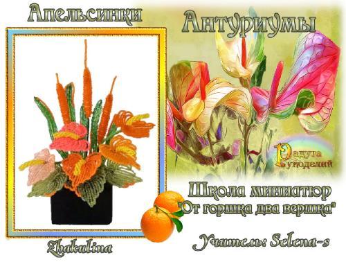 3-ая галерея.Антуриумы.Апельсинки Db9f69ba7f21164f90295ac761fc7115